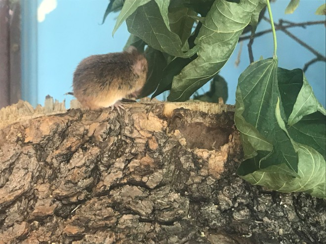 mice.jpg